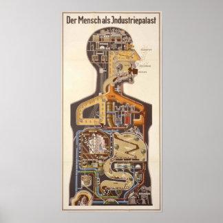 Impresión alemana del poster de la biología humana