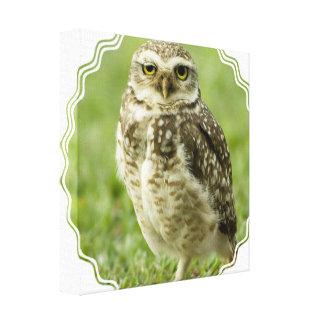 Impresión alerta de la lona del búho impresión en lienzo estirada