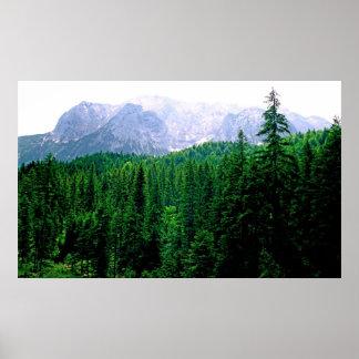 Impresión alpina del bosque posters