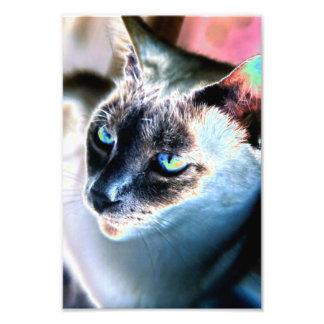 Impresión alterada reservada de la foto del gato s cojinete