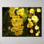Impresión amarilla colgante de las orquídeas impresiones