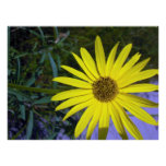 Impresión amarilla de la flor 01 poster