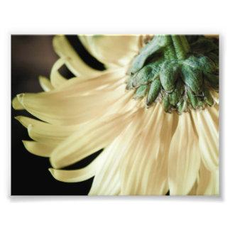 Impresión amarilla de la foto de la margarita fotografía