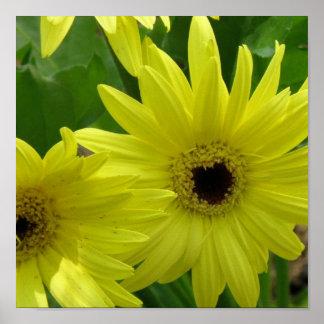 Impresión amarilla de la foto de la margarita póster