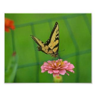 Impresión amarilla de la foto de la mariposa fotografía