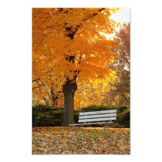 Impresión amarilla de la foto del otoño del árbol