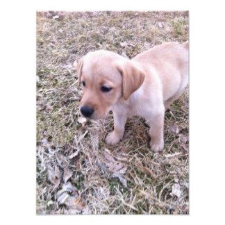 Impresión amarilla de la foto del perrito del labr
