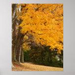 Impresión amarilla de la lona del otoño posters