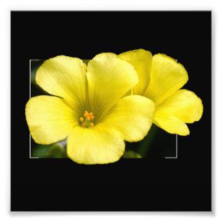 impresión amarilla del cuadrado de las flores cojinete
