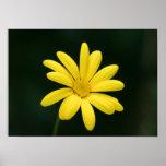 Impresión amarilla del poster de la margarita