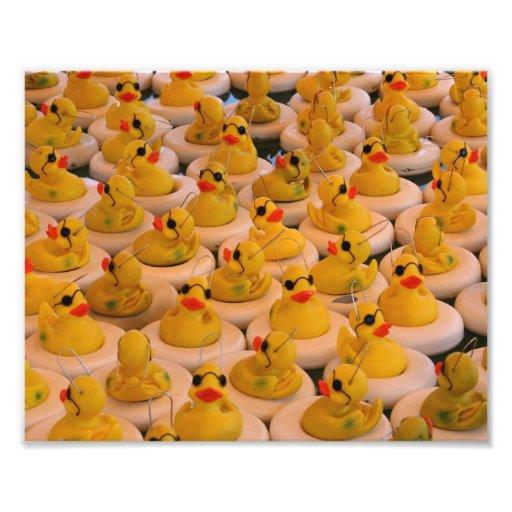Impresión amarilla divertida de los patos 10x8 del impresión fotográfica