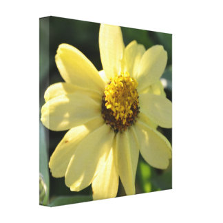 Impresión amarilla escarpada de la lona del Zinnia Impresiones En Lona Estiradas
