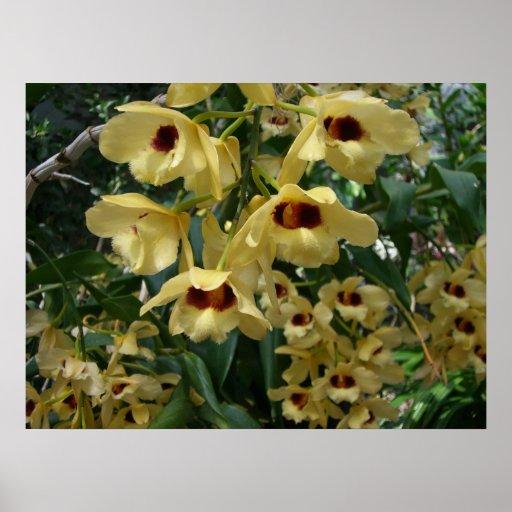 Impresión amarilla y marrón de las orquídeas impresiones