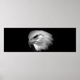 Impresión americana de BW Eagle calvo - posters pa