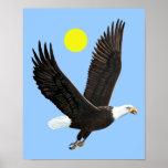 Impresión americana de Eagle calvo Posters