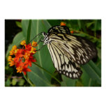 Impresión anaranjada de la flor y de la mariposa impresiones