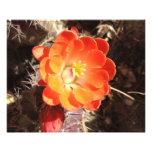 Impresión anaranjada de la foto de la flor del cac