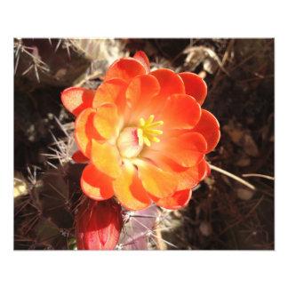 Impresión anaranjada de la foto de la flor del cac fotografías