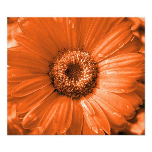 Impresión anaranjada de la foto de la margarita de