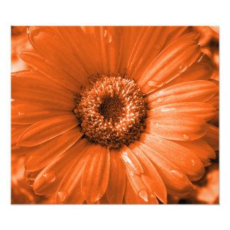 Impresión anaranjada de la foto de la margarita de fotografías