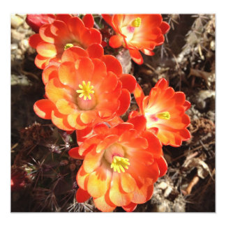 Impresión anaranjada de la foto de las flores del