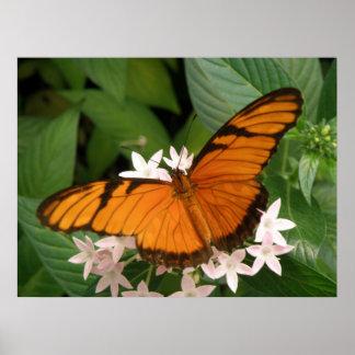 Impresión anaranjada de la mariposa de Julia Posters