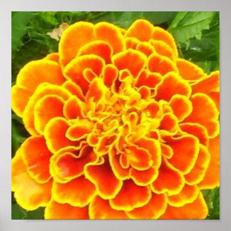 Impresión anaranjada del poster de la maravilla