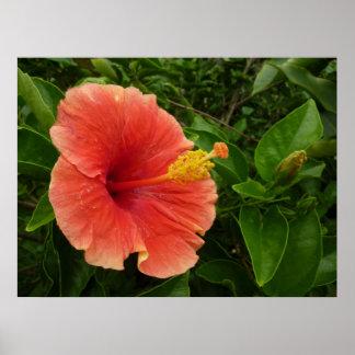 Impresión anaranjada del poster del hibisco