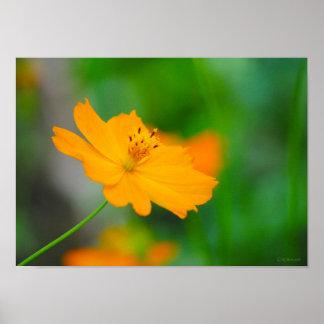 Impresión anaranjada delicada de Framable de la fl Póster