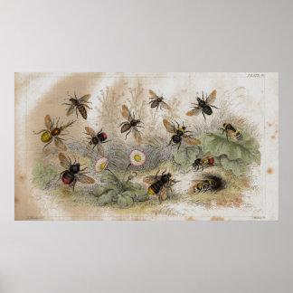Impresión antigua de la litografía de las abejas