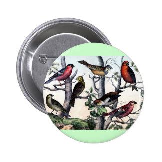 Impresión antigua del pájaro de la historia natura pin