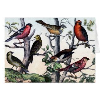 Impresión antigua del pájaro de la historia natura felicitacion