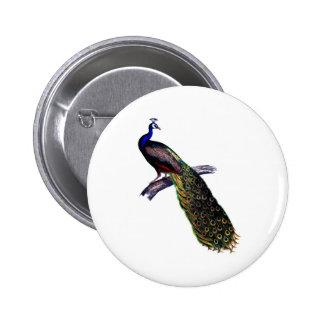 Impresión antigua del pavo real pin