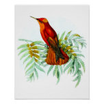 Impresión antigua roja del poster del pájaro del c