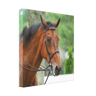 Impresión árabe de la lona del caballo de la bahía lona envuelta para galerias