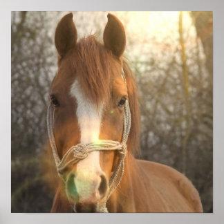 Impresión árabe del poster del caballo de la casta