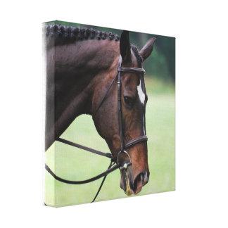 Impresión árabe dulce de la lona del caballo impresión en lienzo estirada