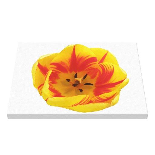 Impresión ardiente de la lona del tulipán impresión en lona