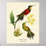 Impresión ardiente del arte de los colibríes del T Impresiones