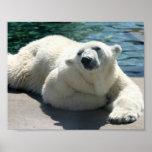 Impresión ártica del poster del oso polar