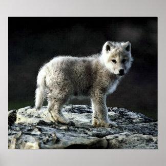 Impresión ártica del poster del retrato del lobo