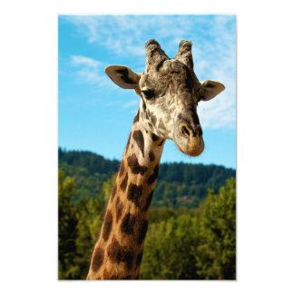 Impresión ascendente cercana de la jirafa cojinete