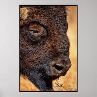 Impresión ascendente cercana del búfalo impresiones