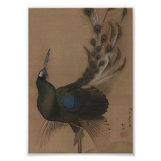 Impresión asiática del arte del pavo real del vint impresiones
