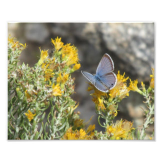 Impresión azul de la foto de la mariposa de Reakir
