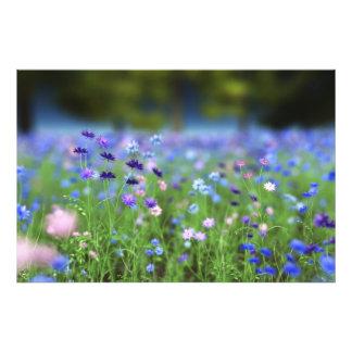 Impresión azul de la foto del Cornflower