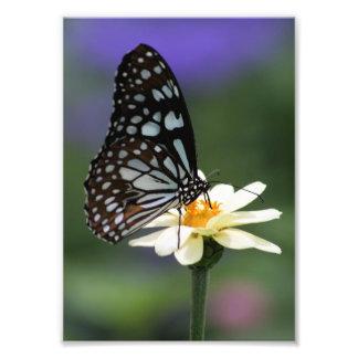 Impresión azul de la foto del tigre fotografía