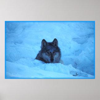 Impresión azul del lobo de madera de la nieve impresiones