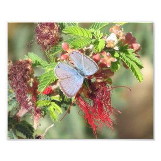 Impresión azul marina de la foto de la mariposa