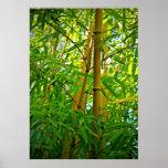 Impresión Bambus de la lona de Leinwanddruck   Lei Poster